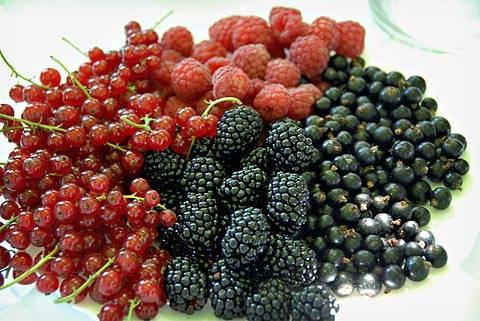 Jagodasto voće u ishrani