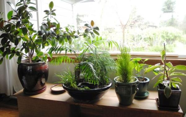 tetno Sobno Cvee Za Zdravlje IN Struni