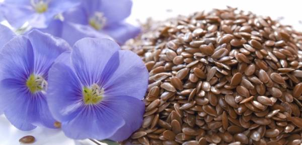 Laneno seme lekovitost