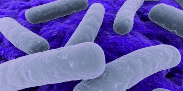 Klostridija – bakterija koja napada debelo crevo