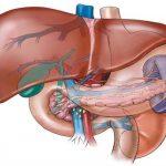 Masna jetra – simptomi i lečenje